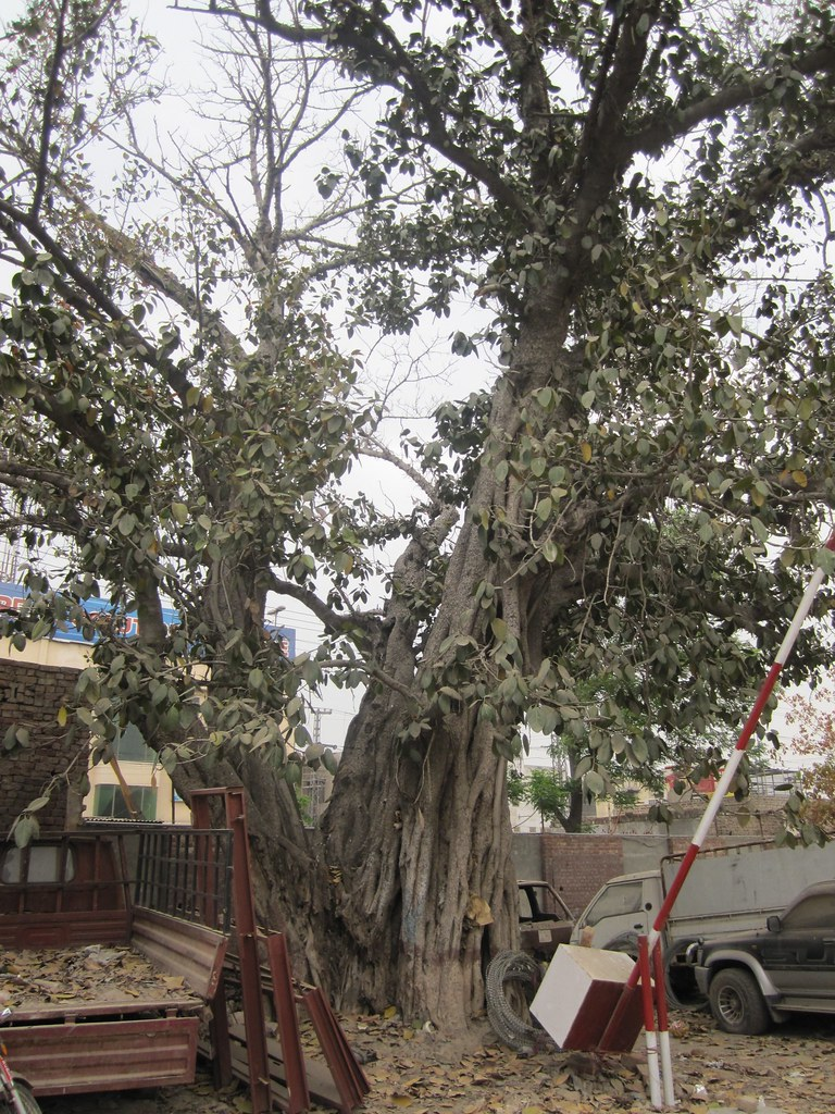 Lahore Cantt Thana
