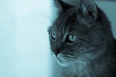 Goodbye Schroeder (michaelTO) Tags: cat cyanotype schroeder