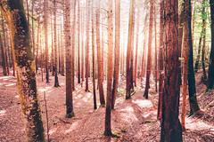 Passeggiando tra i boschi d'autunno