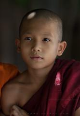 _MG_2184-le-14_04_2016_wat-thail-wattanaram-maesot-thailande-christophe-cochez-cop (christophe cochez) Tags: burmes burma birmanie birman myanmar thailand thailande maesot myawadyy monk bonze novice religion watthailwattanaram travel voyage bouddhisme buddhism portrait