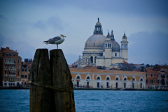 'twas a cold day in Venice (RachaelMc) Tags: from travel blue venice sky italy cold bird tourism church italia view seagull salute blogspot venise venezia venedig travelphotography guidecca laserenissima ilovevenice rachaelmc rjmcdiarmid loveofvenice