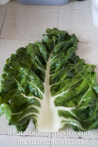 Acelga leaf