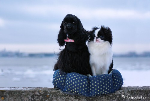 indian japanese emperors friesian school japanese chin