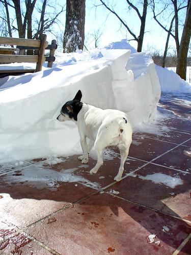 2011-02-02 - Snow Pile! - 0009