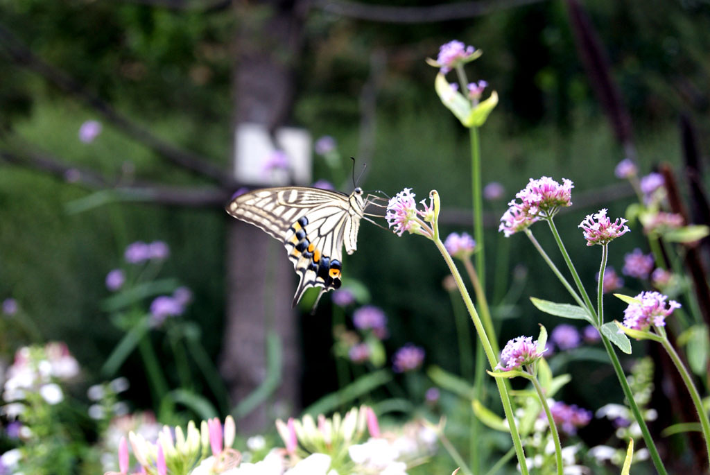 papillon Namba Parks