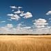 Autumn Grass – Fayetteville, Texas