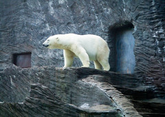 "Prague Zoo 011.jpg • <a style=""font-size:0.8em;"" href=""http://www.flickr.com/photos/59189417@N06/5418086049/"" target=""_blank"">View on Flickr</a>"
