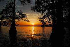 Cypress Sunset (photographyguy) Tags: louisiana cypress swamp caddolake sunset lake cypresstrees oilcity northlouisiana trees nature serene