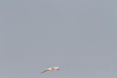 2011_01_29_7787 (shivanayak) Tags: india  birding shiva karnataka pelagic 2011 shivashankar shivashankar 2011 pelagicjan2011mulki