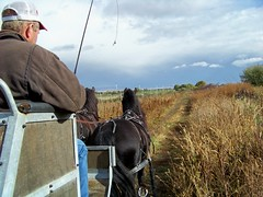100_5777 (obsidianmoonranch) Tags: horses horse equestrian equine friesian carriagedriving