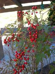 Berry Line