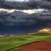 Kangaroo-Golf