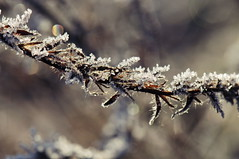 winter beauty (Katharina Becker) Tags: berlin germany frost bokeh winer kalt eis grunewald katharina becker naturfotografie eiskristall icecristal naturfotografiekatharinabecker naturfotografiekatharinabeckerberlin fotografiekatharinabeckerberlin fotografiekatharinabecker