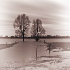 Last remains of a big flood... (Cassius Klay) Tags: longexposure trees netherlands bomen flood nederland le overstroming winterbeauty waaldijk silverefexpro
