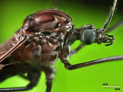 (akalbudi) Tags: macro green nature up forest giant insect lens