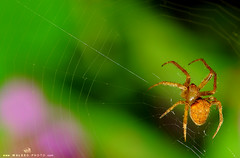 Spider  II (  || WALEED PHOTO) Tags: spider photo nikon mm waleed d300 focal       length105   aljurish