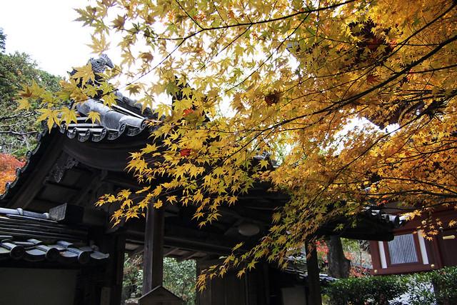 101115_145552_円成寺