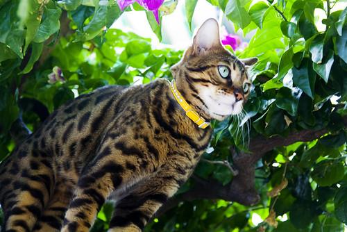 El pequeño tigre dio un salto de una isla a otra :)