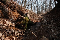 Monteregio Eco Trail (Monteregio Eco Trail) Tags: novara boschi ghemme lecolline monteregio collinenovaresi monteregiotrail