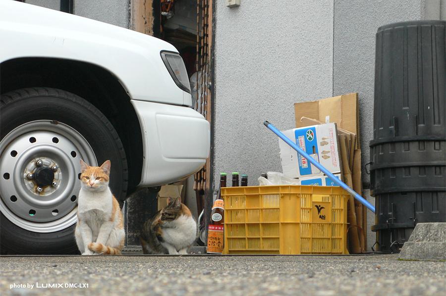 ネコ|居酒屋の前