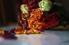 colorful decay (PaneDM) Tags: flowers roses flower color colors rose petals petal pregame thepinnacle bigmomma thechallengefactory themotherofallchallengegroups bigmommaaward thechallengefactoryunanimouswinner thepinnaclehof pregamewinner withereddecayeddecaying tphofweek87 pinnaclemar