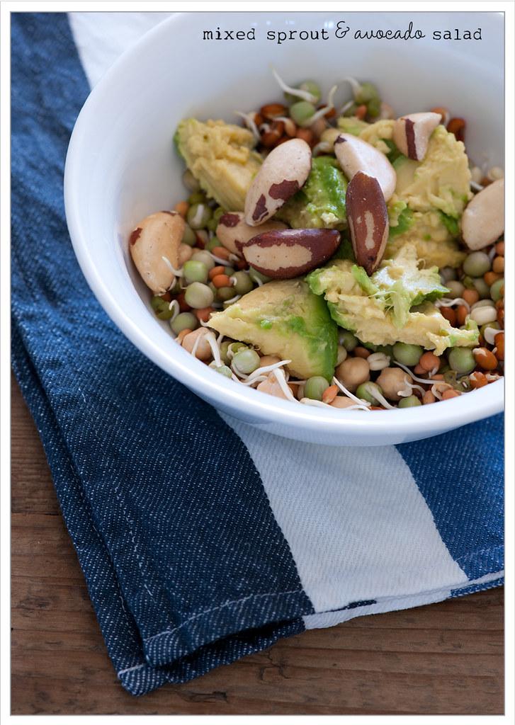 mixed sprout & avocado salad