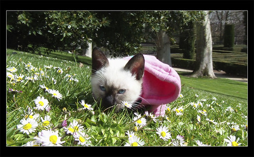 que ricas las flores!