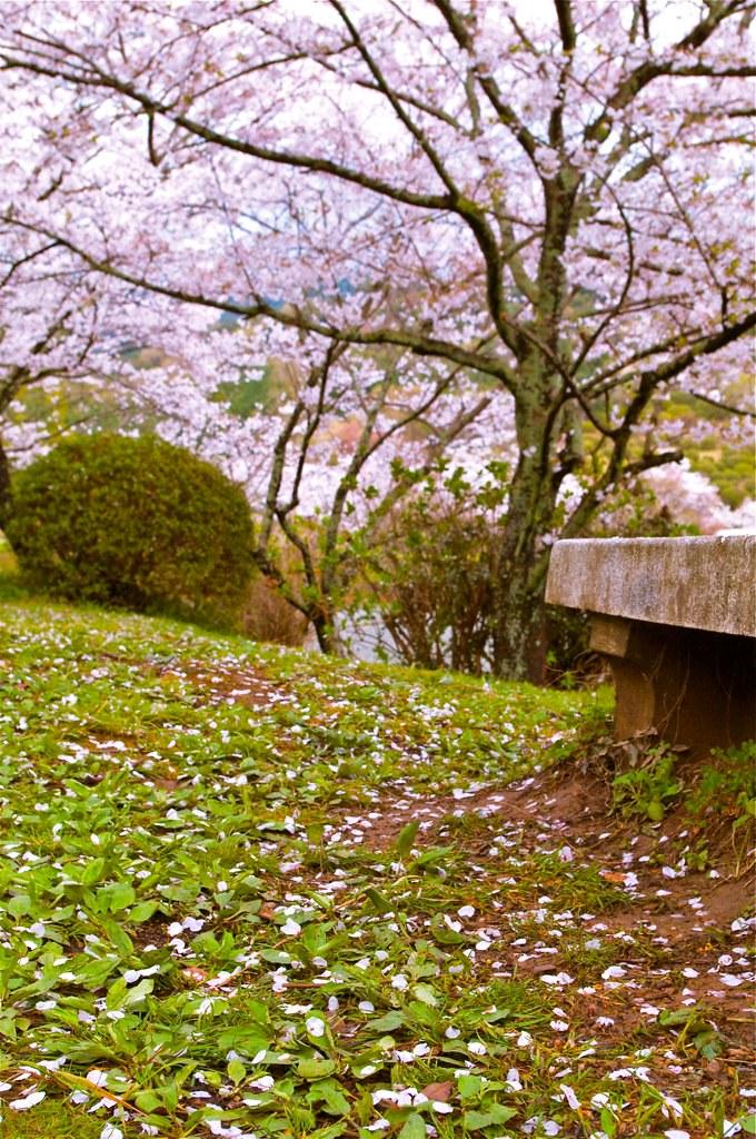 日本九州賞櫻遊(2010春)