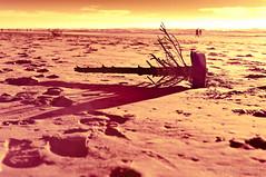 waste (gobo_x (marimba)) Tags: sf sanfrancisco california landscape ir pentax infrared modified k7 fullspectrum fauxcolor smcpfa31mmf18 bw099filter ggnpc11