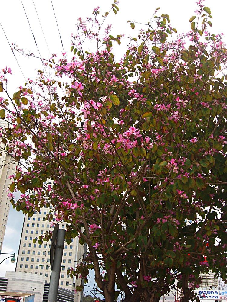 09-03-2011-flowertree