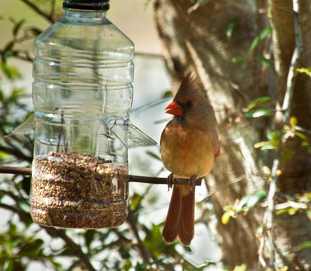 Bird Feeder?