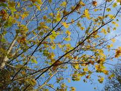 """Efterårsfarver • <a style=""""font-size:0.8em;"""" href=""""http://www.flickr.com/photos/53551333@N05/5525320381/"""" target=""""_blank"""">View on Flickr</a>"""