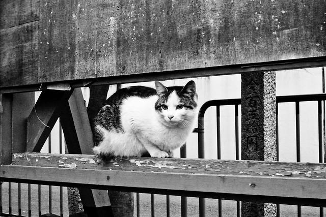 Today's Cat@2011-03-14