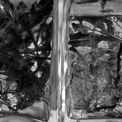 Water Mirror - Wasser Spiegel --- Aktion: Glas Wrfel Wasser ~ Glas Cube Water (hedbavny) Tags: vienna wien autumn winter summer plant reflection art water glass austria mirror sketch sterreich spring wasser underwater sommer spiegel kunst diary herbst jahreszeit pflanze sketchbook september note cube mementomori rotten transition root decomposition spiegelung tagebuch glas wrfel glaswrfel aktion frhling wurzel vanitas unterwasser undine verfall verwelkt skizze notiz melancholie radix wasserpflanze wasserspiegel skizzenbuch bergang wienvienna sterreichaustria glasscube aktionismus scheintod transitio hedbavny ingridhedbavny