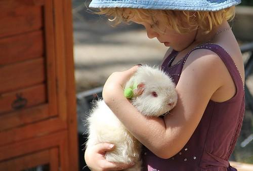 AOL guinea pig