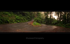 Capturing The Vision (rhyspope) Tags: road street blue mist mountain fern tree green wet water rain fog forest canon leaf bush rainforest track branch mt path australia bluemountains read mount aussie mountwilson 500d rhyspope