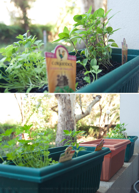 Little herb garden