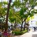 Plaza de los Naranjos_6