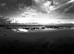 china camp marsh (Amanda Tomlin) Tags: linhof chinacamp acros