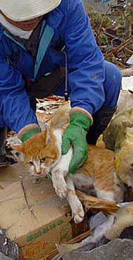 Kinship Circle - 2011-03-19 - Aiding animals in Japan 03