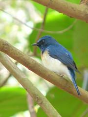 P1150846 (babsybou) Tags: travel india birds silent watching kerala du valley yatra sud inde attapadi birdswatching babsybou malleeshwaramjunglelodge pettickal