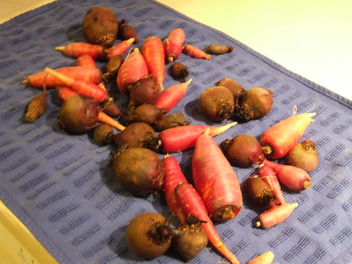 Beets & dragon carrots