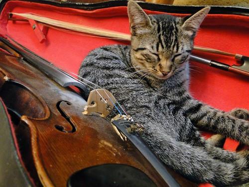 """O violinista"""