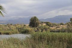 Paisaje de La Charca de Maspalomas