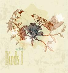 birds-album (lameck_fernandes) Tags: birds hard rock