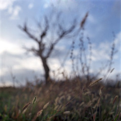 hilltop part.3 (Roparaggi.) Tags: tree 120 6x6 film arbol pelicula albero pellicola kodakportra400nc zenzabronicas2a