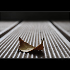 when the lifeline stops (guido ranieri da re: work wins, always off) Tags: life leaf nikon miesvanderrohe foglia indianajones vita lifeline lessismore homeshots d700 ilmenopi nonsonoglianniamoresonoichilometri guidoranieridare