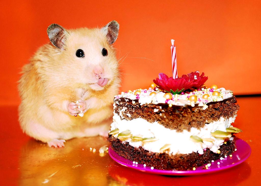 Прошу столу, с днем рождения картинки с хомяками