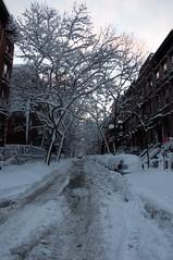 Brooklyn Heights-Remsen St (aloucha) Tags: nyc newyorkcity morning winter moon snow tree brooklyn sunrise dawn nikon snowstorm january brooklynheights brownstone treebranch 2011 d90
