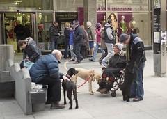 Dog Meet (the underlord) Tags: street dog film poodles dogs 35mm candid wheelchair rangefinder 200asa poodle fujifilm meet southport greet merseyside jupiter8 fujisuperia200 russianlens r4a jupiter8502 voigtlanderbessar4a believeinfilm